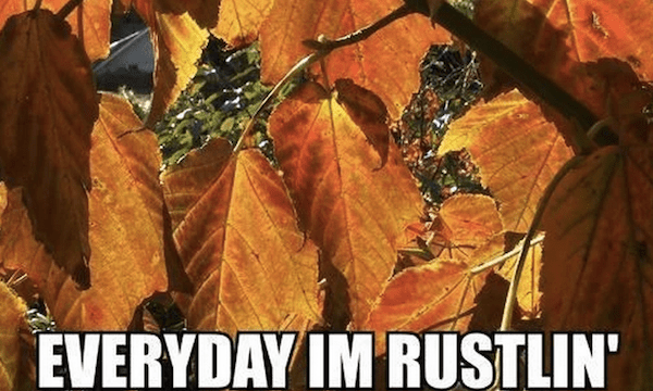 Everyday I'm Rustlin' #fall #autumn #fallmemes #memes