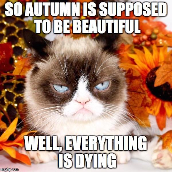 #fall #autumn #fallmemes #memes #grumpycat