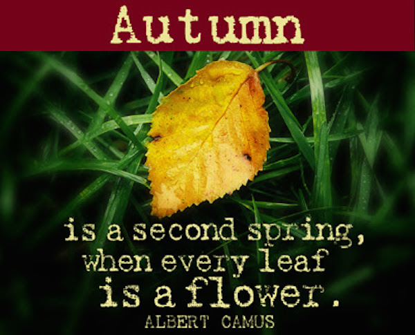 Autumn is a second spring, when every leaf is a flower. #fall #autumn #fallmemes #memes #deepthoughts