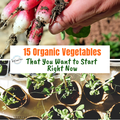 15 Organic Vegetables That You Want to Start Right Now
