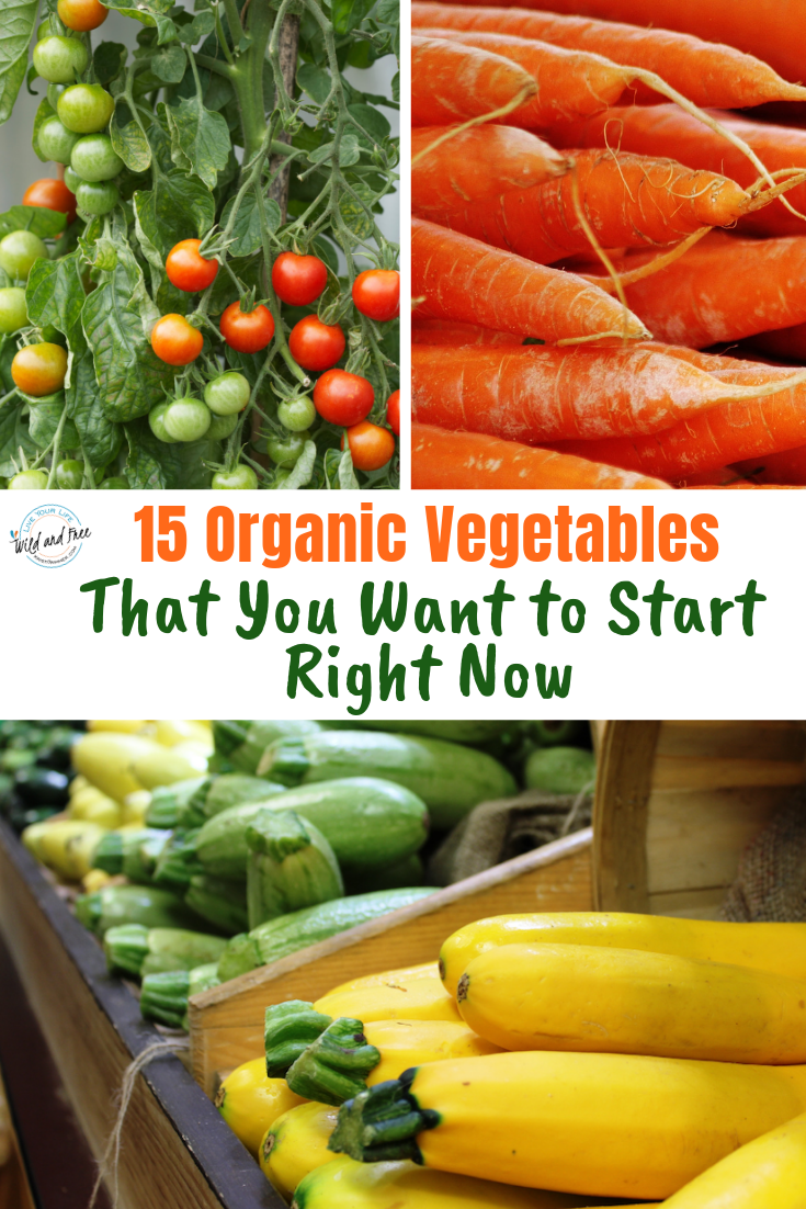 15 Organic Vegetables That You Want to Start Right Now #vegetablegardening #organicgardens #gardeningtips