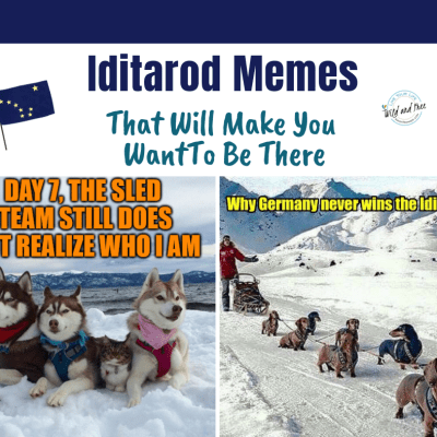 Iditarod Memes That Will Make You Want to Be There