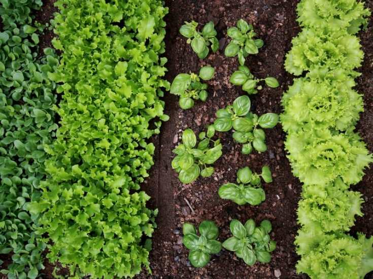 7 Easy Vegetables To Grow This Spring