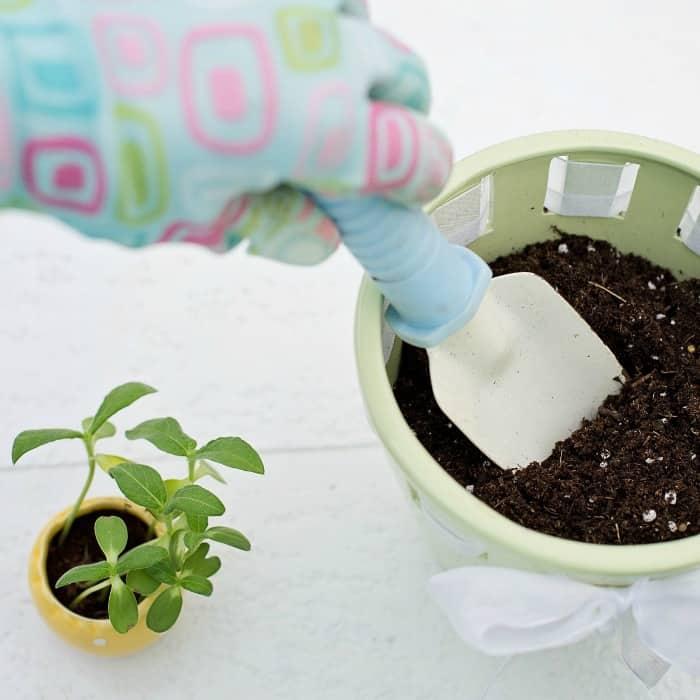 Spring Gardening on a Budget