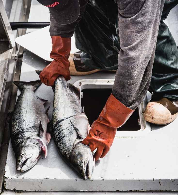 Wildly Different: Sitka Salmon, Small Boat Fisherman Sharing Their Catch With The Midwest