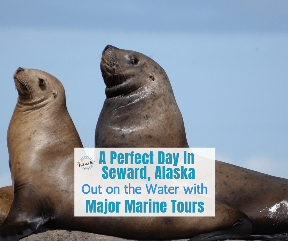 A Perfect Day in Seward, Alaska Out on the Water with Major Marine Tours #sewardalaska #cruises #alaska