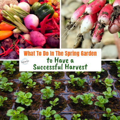 What To Do In The Spring Garden to Have a Successful Harvest