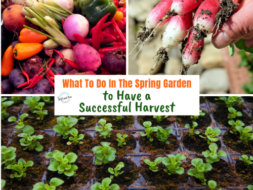 What To Do In The Spring Garden to Have a Successful Harvest #springgarden #gardentips