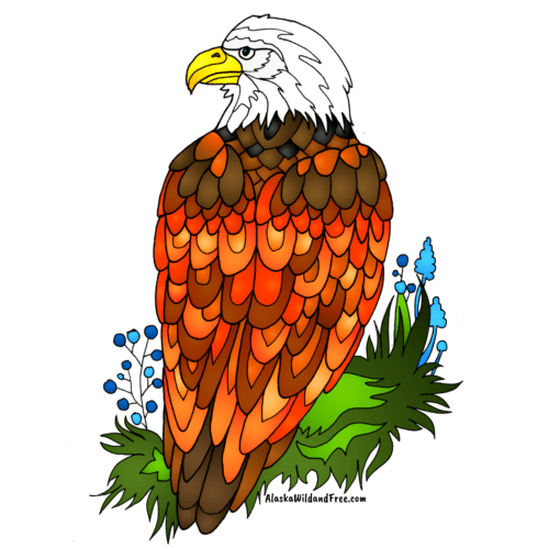 Bald Eagle Sticker from Alaska Wild & Free