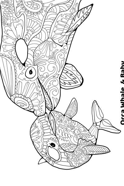 Orca Whale Coloring Printable