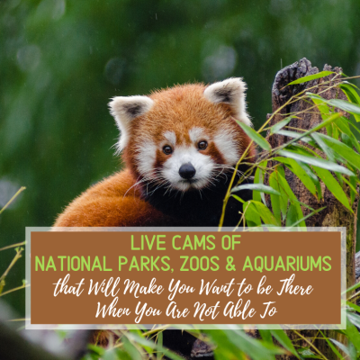 Live Cams of National Parks, Zoos & Aquariums that Will Make You Want to be There