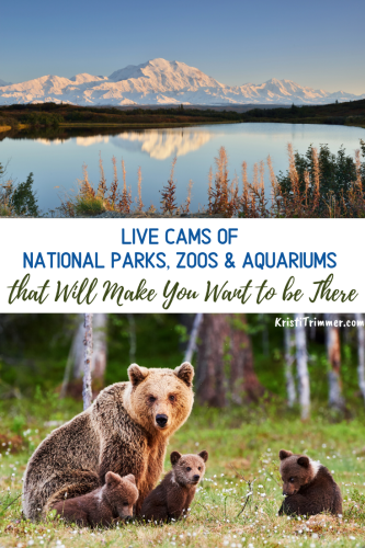 Live Cams of National Parks, Zoos & Aquariums that will make you want to be there when you are not able to be