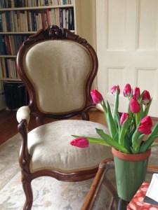 Susan Pollock's office tulips