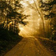 What is Radical Emergent Self-Wisdom?