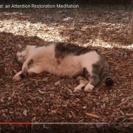 Tara Mandala Sleepy Cat (1 minute)