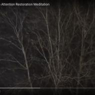 St Louis Night Snow: an Attention Restoration Meditation (2 minutes)