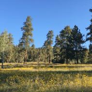 Vallecitos Wildflowers and Birds: an Attention Restoration Meditation (1 minute)
