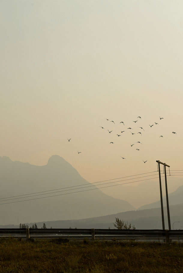 Forest Fire Smoke In Canmore