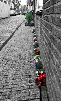 kukat kolossa