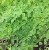 vihreä-2