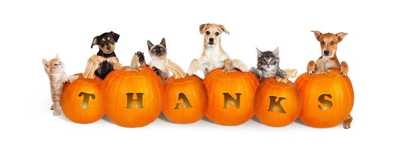 Business Musings: An Attitude of Gratitude (A Thanksgiving Blog)