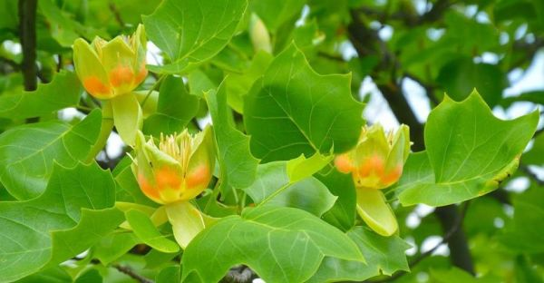 Криворожский ботанический сад приглашает полюбоваться ...