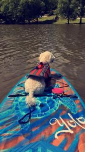 Max paddle boarding