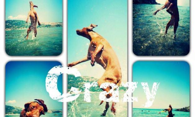 Nyaralás kutyával, vagy anélkül