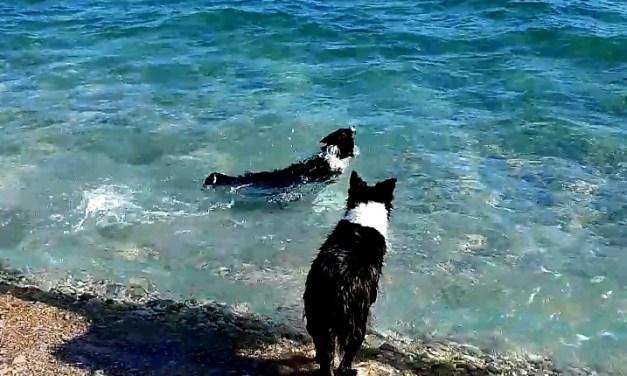 Kutyás hétvégi kirándulás Krk szigeten