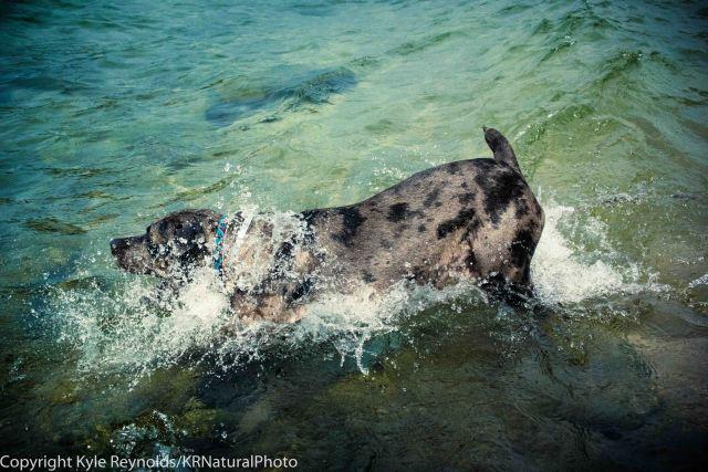 Splashing Around.
