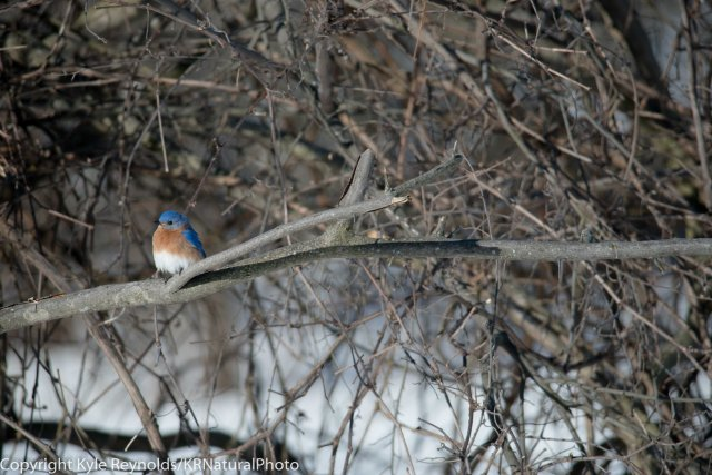 Tanglewood _March 17, 2017_166