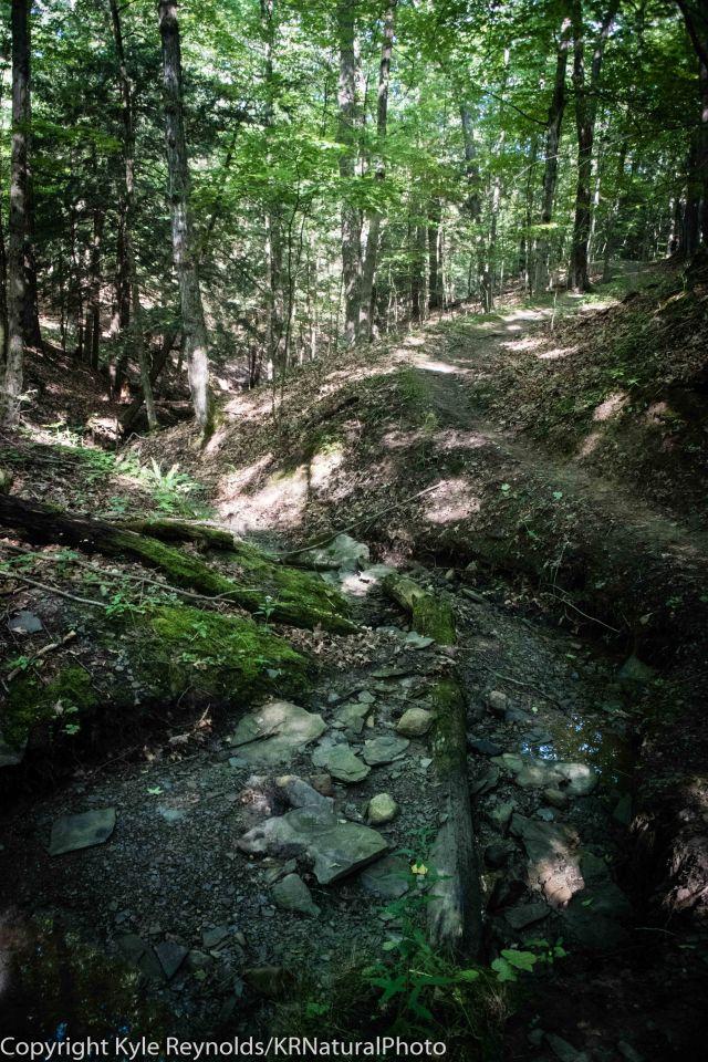 Dam Good Trail Race_August 13, 2017_5