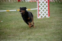 Wine Country Circuit Dog Show_September 29, 2017_1930