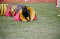 Wine Country Circuit Dog Show_September 29, 2017_1936