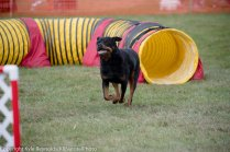 Wine Country Circuit Dog Show_September 29, 2017_1937