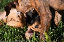 Foster puppies_June 26, 2018_412