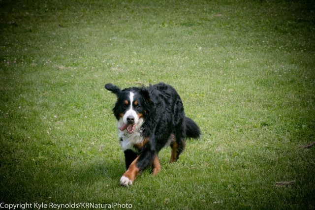 Ithaca Dog Park_June 10, 2018_317