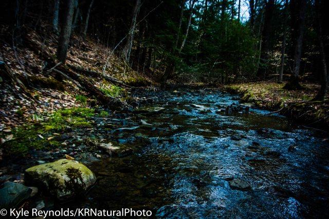 Finger Lakes Trail Stream Crossing