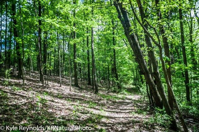 The forests at Tanglewood Nature Center