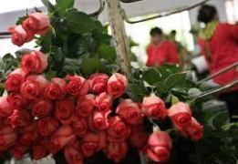 Rosas de Ecuador
