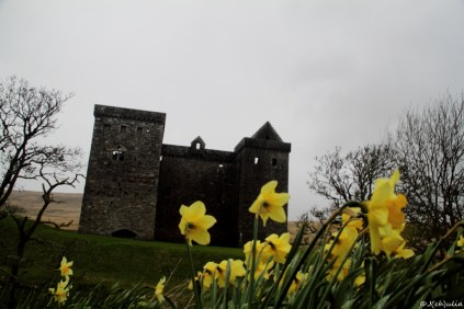 Hermitage Castle, the daffodils were the only colorful thing there...