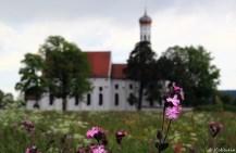 St Coloman mit Wiesenschaumkraut