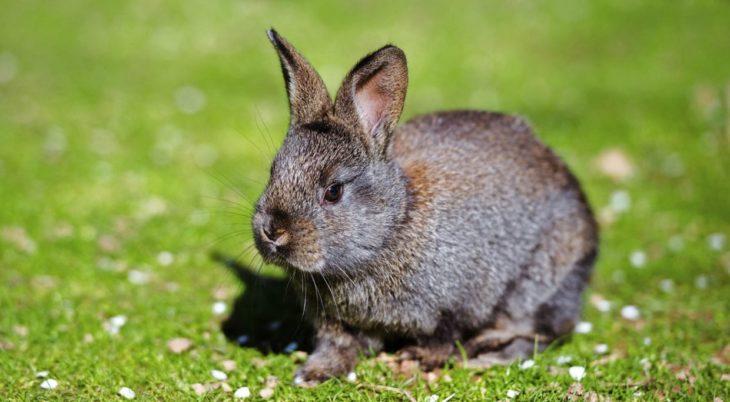 iepurii pierde în greutate în timpul verii