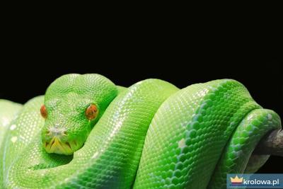 Wąż Biblia