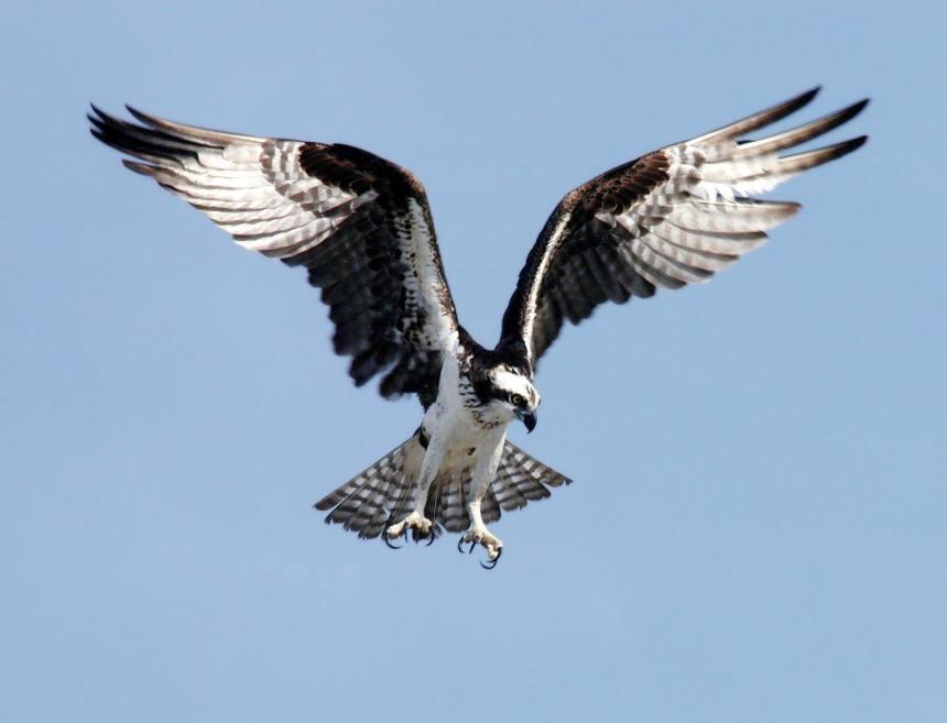 The bird metaphor political philosophy social divide