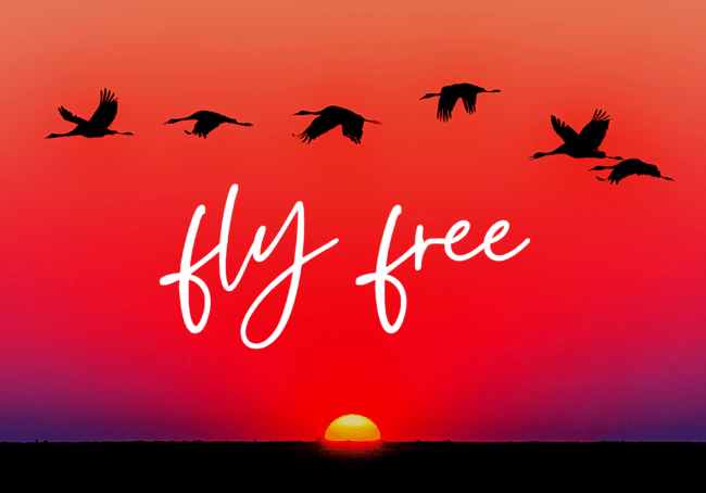 fly free