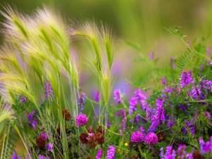 Лугові трави