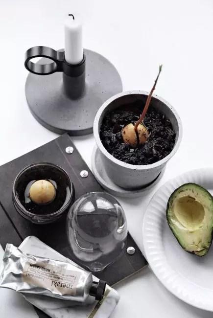 Авокадо сүйек үйін өсіру