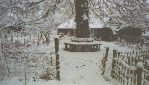 winterse boombank