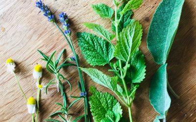 Hoogsensitiviteit en Kruiden (+ recepten)
